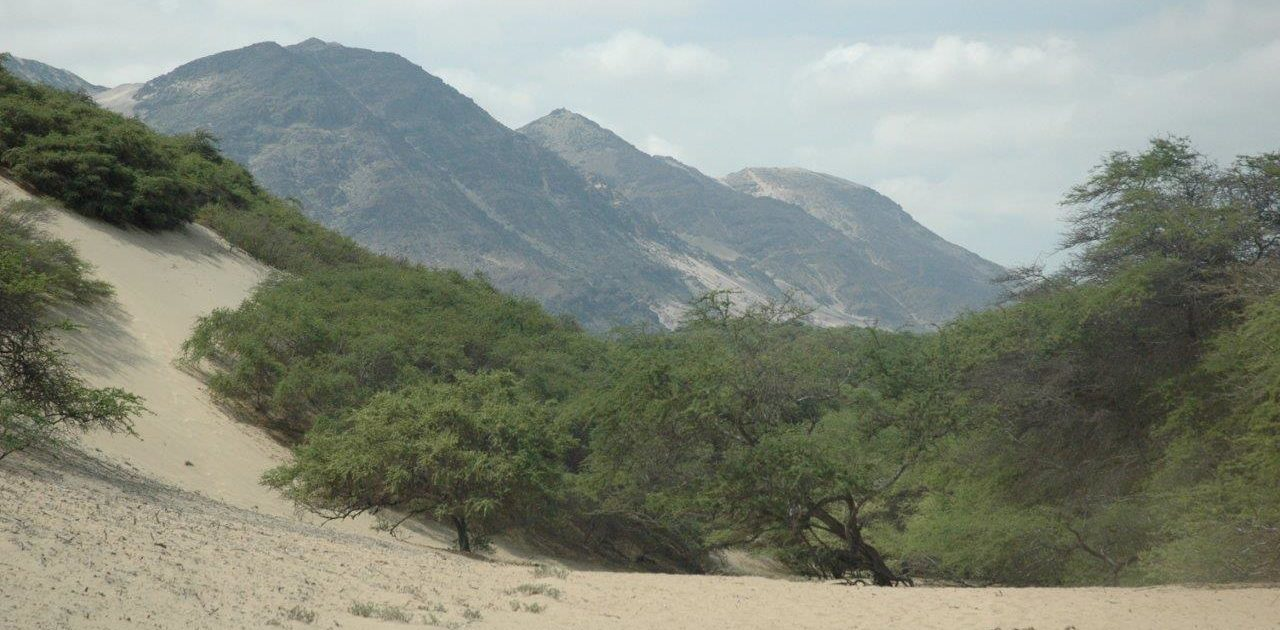 A Rocha Peru is restoring dry coastal forests.