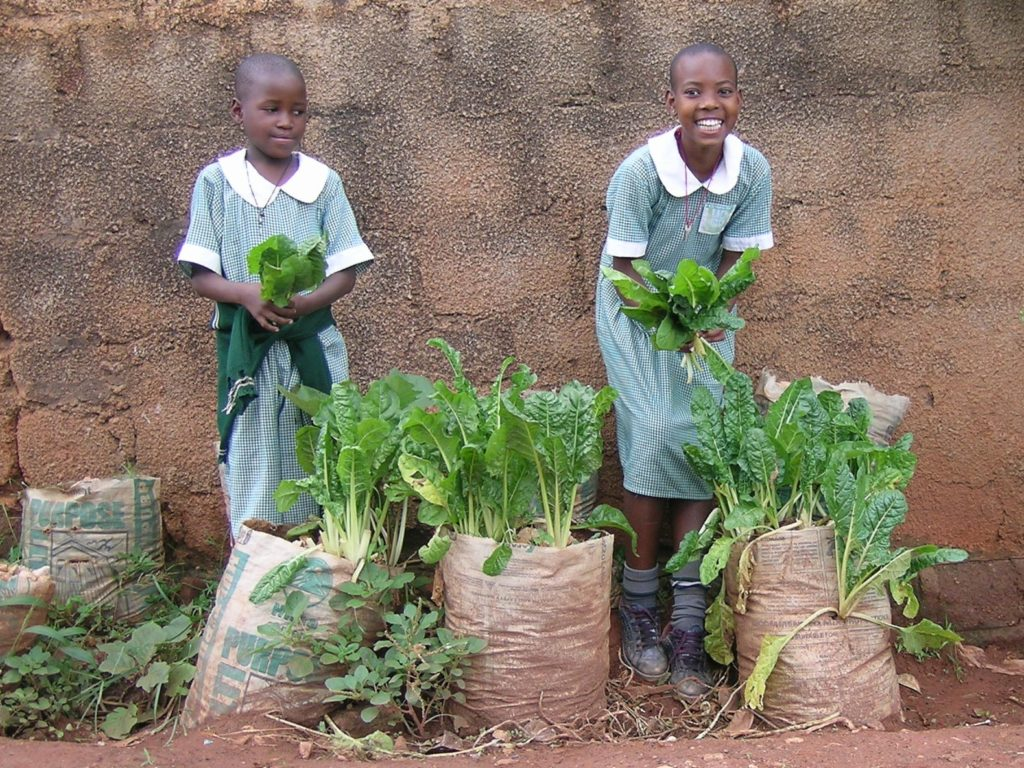 Through Eco-school activities in Uganda, A Rocha is teaching young people how to grow vegetables in sacks, thus improving their diet. (A Rocha Uganda)
