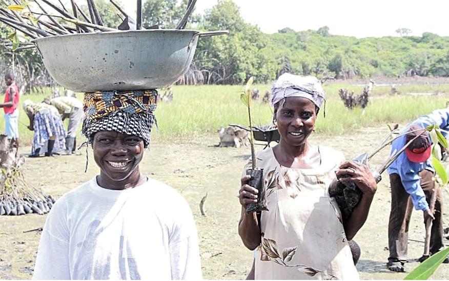 Plantación de árboles de mangle en Ghana