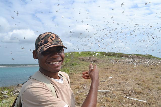 Monitorando andorinhas-do-mar na Ilha Whale, Quênia (foto: Jaap Gijsbertsen)