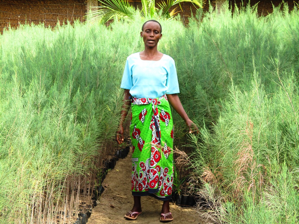 Dama's fast-growing trees provide a source of income and fuel and timber for her family