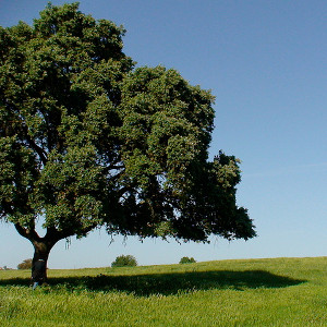 Tree in the plains