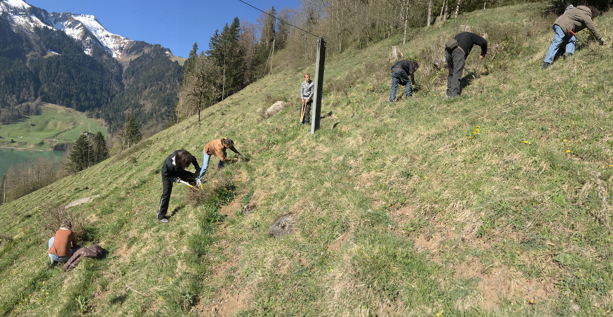 A Rocha Switzerland volunteers clearing a dry meadow at Rossinière (Vaud)