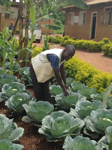 Ibrahim Sekamate shows us the vegetables