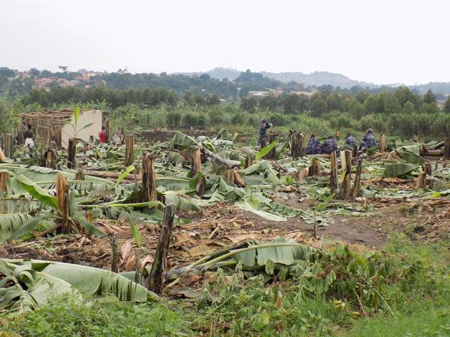 Polícia ambiental em ação durante o exercício de restauração (A Rocha Uganda)
