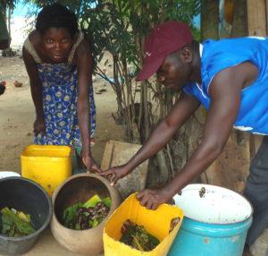 A Rocha Gana tem treinado mais de 5.000 pessoas em meios de subsistência novos e sustentáveis, como esta mulher que está aprendendo a criar caracóis como parte do programa para proteger os mangues costais.
