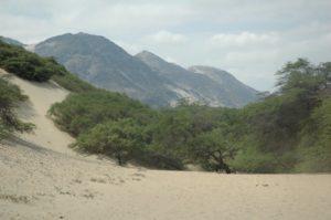 A Rocha Perú está restaurando bosques costeros secos.