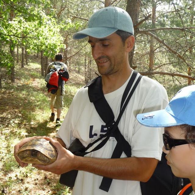 8 Joro with tortoise
