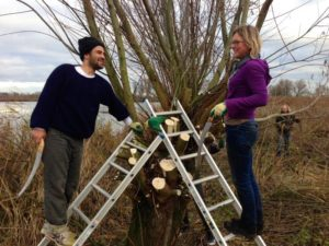 tratando los árboles